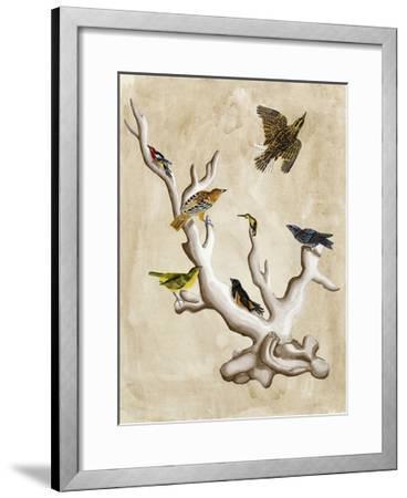 The Ornithologist's Dream III-Naomi McCavitt-Framed Art Print