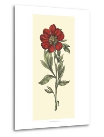 Embellished Blooming Peonies I-Besler Basilius-Metal Print