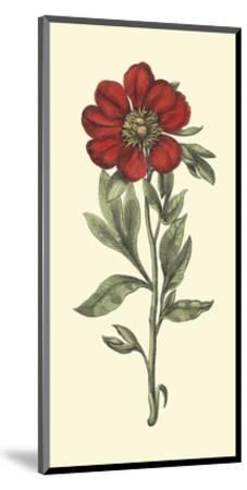 Embellished Blooming Peonies I-Besler Basilius-Mounted Art Print