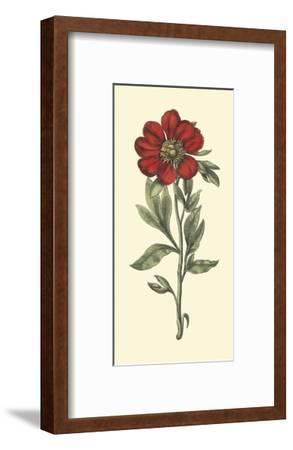 Embellished Blooming Peonies I-Besler Basilius-Framed Art Print