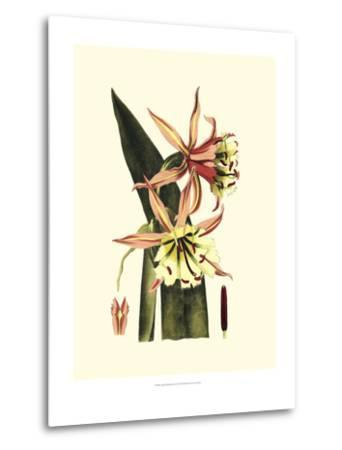 Crackled Striking Beauty I-Vision Studio-Metal Print