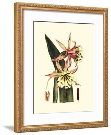 Crackled Striking Beauty I-Vision Studio-Framed Art Print