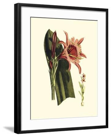 Striking Beauty II-Vision Studio-Framed Art Print
