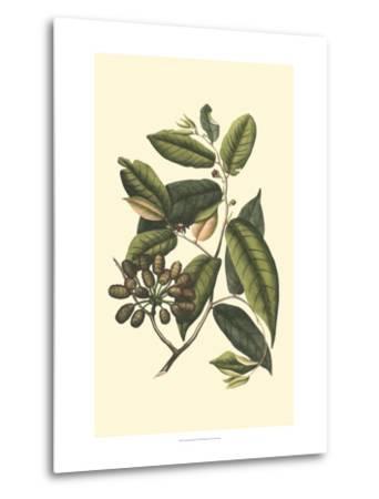 Flourishing Foliage III-Vision Studio-Metal Print