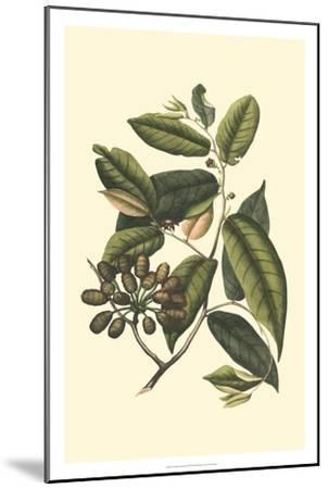 Flourishing Foliage III-Vision Studio-Mounted Art Print