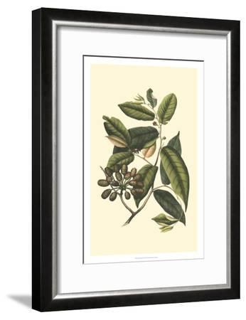 Flourishing Foliage III-Vision Studio-Framed Art Print