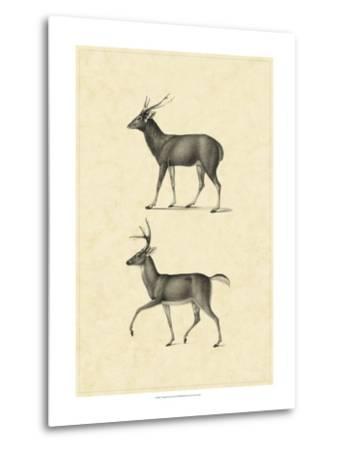 Vintage Deer II-Vision Studio-Metal Print