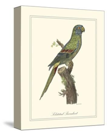 Solstitial Parrakeet-George Edwards-Stretched Canvas Print