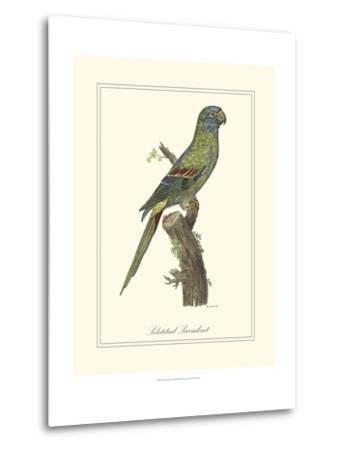 Solstitial Parrakeet-George Edwards-Metal Print