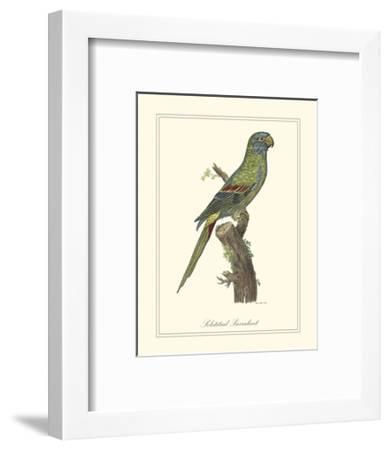 Solstitial Parrakeet-George Edwards-Framed Art Print