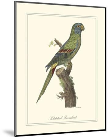 Solstitial Parrakeet-George Edwards-Mounted Art Print