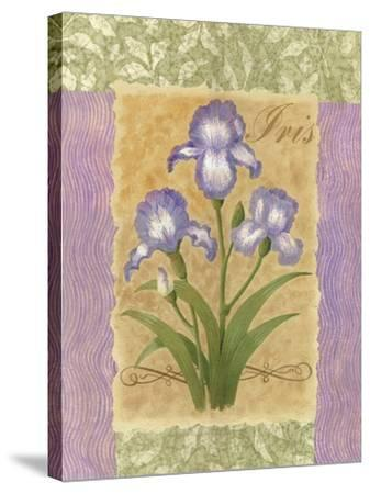 Sweet Iris-Louise Max-Stretched Canvas Print