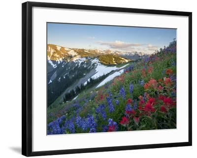 Indian Paintbrush and Lupine, Olympic National Park, Washington, USA-Gary Luhm-Framed Photographic Print