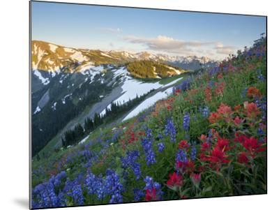 Indian Paintbrush and Lupine, Olympic National Park, Washington, USA-Gary Luhm-Mounted Photographic Print