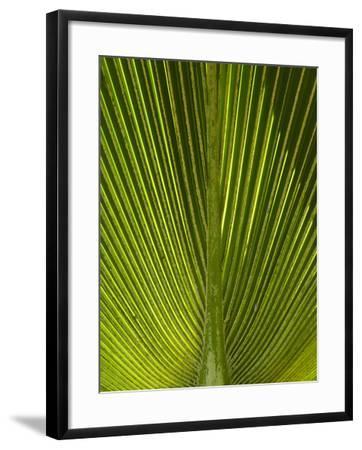 Palm Frond, Nadi, Viti Levu, Fiji, South Pacific-David Wall-Framed Photographic Print