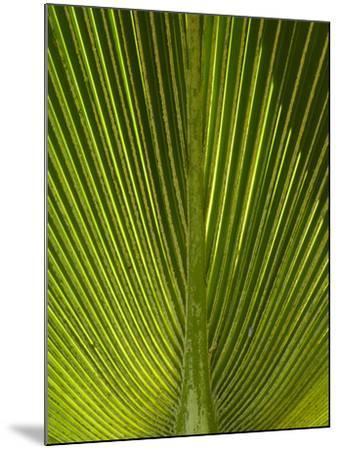 Palm Frond, Nadi, Viti Levu, Fiji, South Pacific-David Wall-Mounted Photographic Print