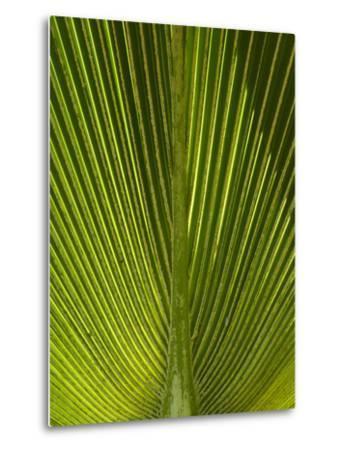 Palm Frond, Nadi, Viti Levu, Fiji, South Pacific-David Wall-Metal Print