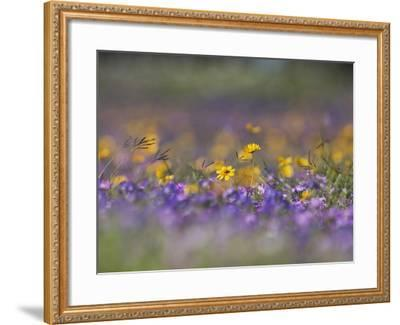 Roadside Wildflowers, Texas, USA-Larry Ditto-Framed Photographic Print
