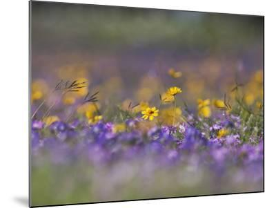 Roadside Wildflowers, Texas, USA-Larry Ditto-Mounted Photographic Print