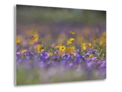 Roadside Wildflowers, Texas, USA-Larry Ditto-Metal Print