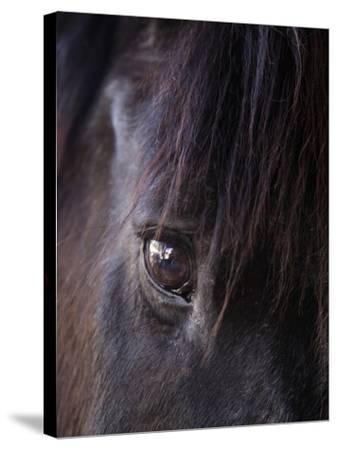 White Stallion Dude Ranch, Tucson, Arizona, USA-Julian McRoberts-Stretched Canvas Print