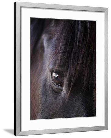 White Stallion Dude Ranch, Tucson, Arizona, USA-Julian McRoberts-Framed Photographic Print