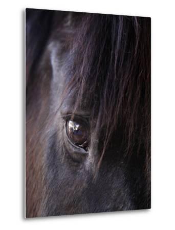 White Stallion Dude Ranch, Tucson, Arizona, USA-Julian McRoberts-Metal Print