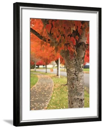 Fall Colors, Keizer, Oregon, USA-Rick A^ Brown-Framed Photographic Print