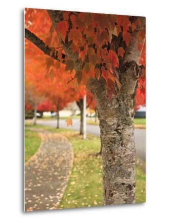 Fall Colors, Keizer, Oregon, USA-Rick A^ Brown-Metal Print