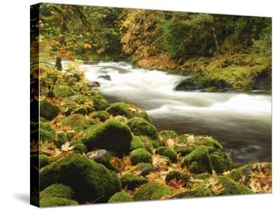 Sandy River in Autumn, Welches, Oregon, USA-Michel Hersen-Stretched Canvas Print