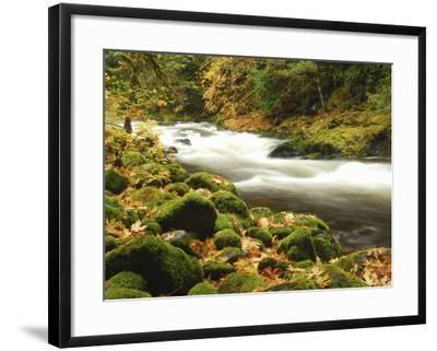 Sandy River in Autumn, Welches, Oregon, USA-Michel Hersen-Framed Photographic Print