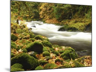 Sandy River in Autumn, Welches, Oregon, USA-Michel Hersen-Mounted Photographic Print