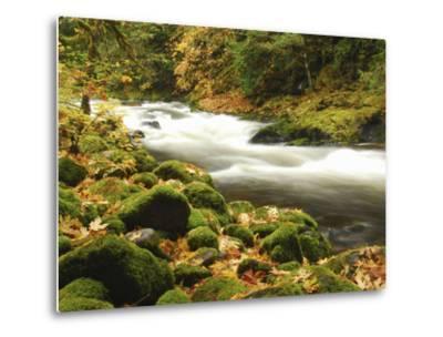 Sandy River in Autumn, Welches, Oregon, USA-Michel Hersen-Metal Print