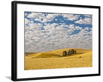 Dawn Breaks on Wheat Field, Walla Walla, Washington, USA-Richard Duval-Framed Photographic Print
