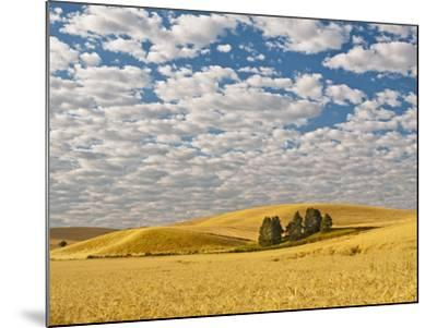 Dawn Breaks on Wheat Field, Walla Walla, Washington, USA-Richard Duval-Mounted Photographic Print