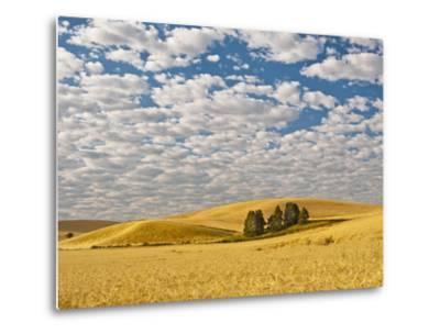 Dawn Breaks on Wheat Field, Walla Walla, Washington, USA-Richard Duval-Metal Print