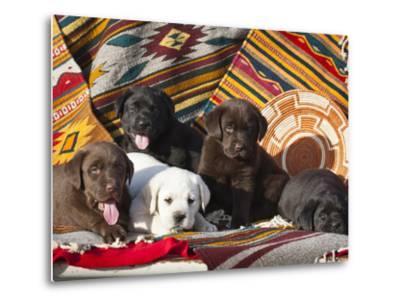 Five Labrador Retriever Puppies of All Colors on Southwestern Blankets-Zandria Muench Beraldo-Metal Print