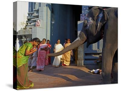 Elephant Benediction, Kamakshi Amman, Kanchipuram, Tamil Nadu, India, Asia-Tuul-Stretched Canvas Print
