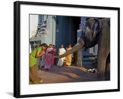 Elephant Benediction, Kamakshi Amman, Kanchipuram, Tamil Nadu, India, Asia-Tuul-Framed Photographic Print