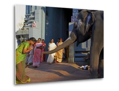 Elephant Benediction, Kamakshi Amman, Kanchipuram, Tamil Nadu, India, Asia-Tuul-Metal Print