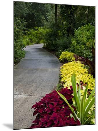 Harry P. Leu Gardens, Orlando, Florida, United States of America, North America-Michael DeFreitas-Mounted Photographic Print