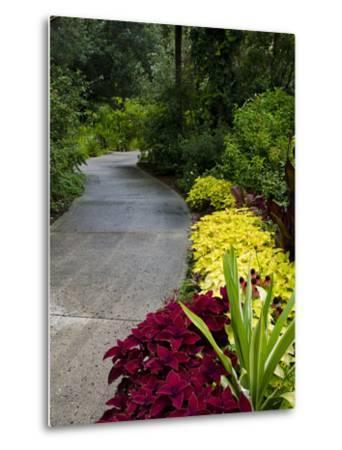 Harry P. Leu Gardens, Orlando, Florida, United States of America, North America-Michael DeFreitas-Metal Print