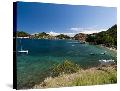 Le Bourg, Iles Des Saintes, Terre de Haut, Guadeloupe, French Caribbean, France, West Indies-Sergio Pitamitz-Stretched Canvas Print