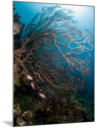 Reef Scene with Sea Fan, St. Lucia, West Indies, Caribbean, Central America-Lisa Collins-Mounted Photographic Print
