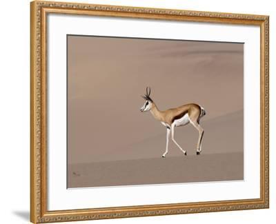 Springbok (Antidorcas Marsupialis) on Sand Dune, Skeleton Coast National Park, Namibia, Africa-Sergio Pitamitz-Framed Photographic Print