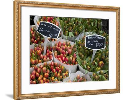 Tulips, Bloemenmarkt, Amsterdam, Holland, Europe-Frank Fell-Framed Photographic Print