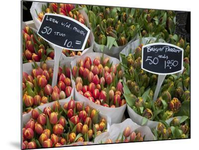 Tulips, Bloemenmarkt, Amsterdam, Holland, Europe-Frank Fell-Mounted Photographic Print