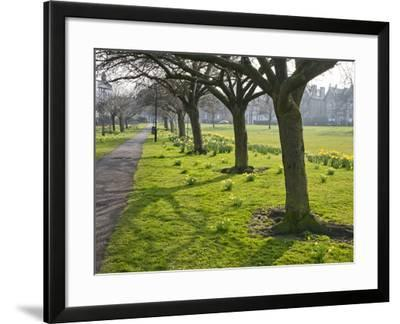 Daffodils on the Stray, Harrogate, North Yorkshire, England-Mark Sunderland-Framed Photographic Print