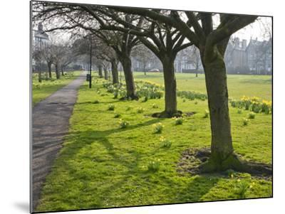 Daffodils on the Stray, Harrogate, North Yorkshire, England-Mark Sunderland-Mounted Photographic Print