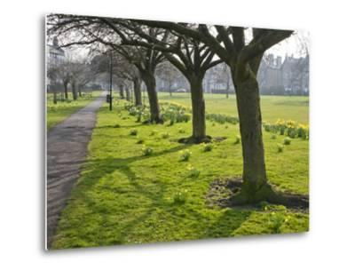 Daffodils on the Stray, Harrogate, North Yorkshire, England-Mark Sunderland-Metal Print